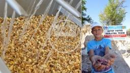 Antep Fıstığı Üreticisi'ne Büyükşehir'den Destek