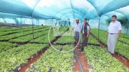 Çaltıbozkır'da Çiftçiler Çilek Fidelerini Kendileri Üretiyor