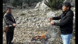 Çaltıbozkırlılar 30 Metrelik Ağaçlardan Mantar Topluyor